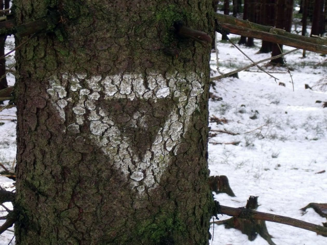 Image shows tree marked with upside-down triangle with dot in centre