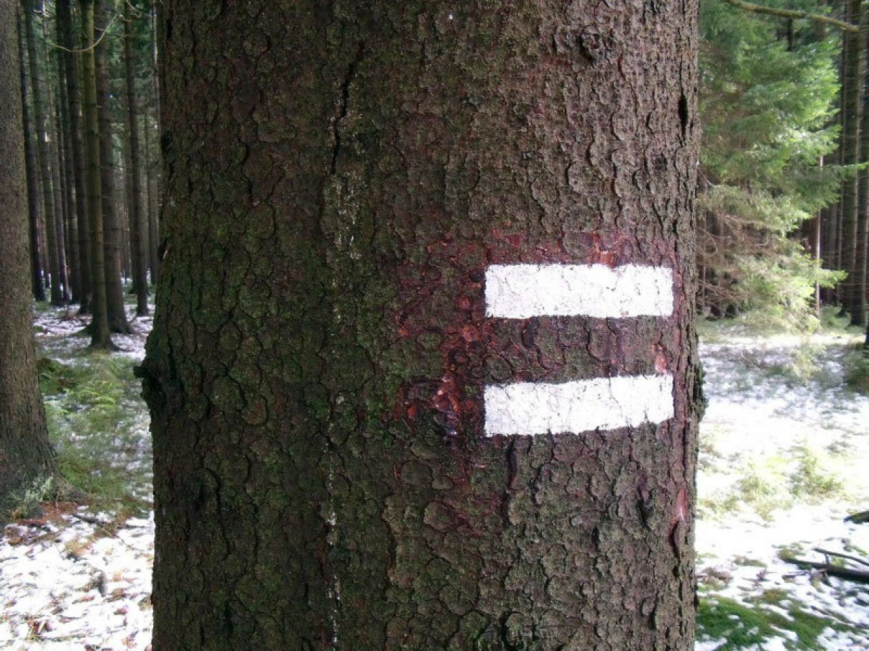 Image shows tree marked with two horizontal white stripes