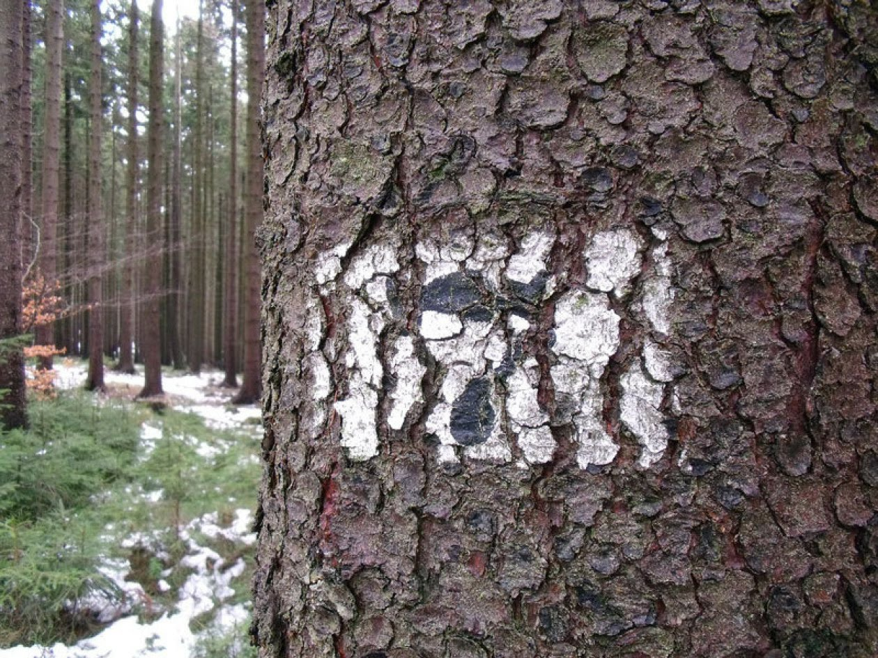 Image shows tree marked with black number in white triangle