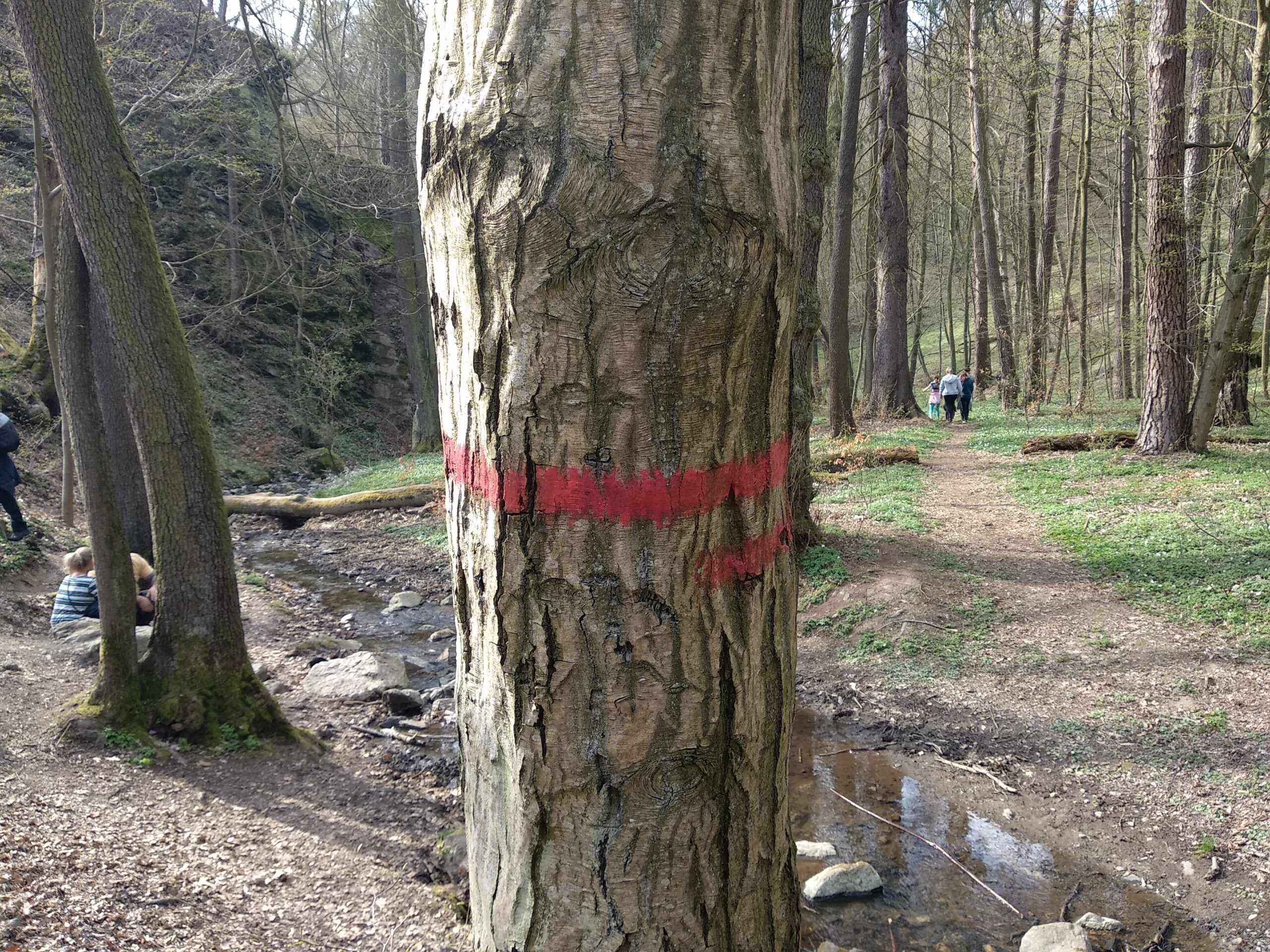 Image shows tree marked with red horizontal stripe