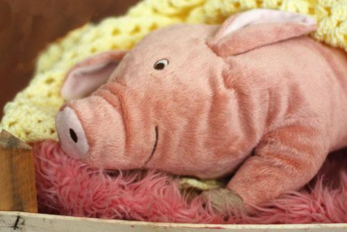 paternity-pig-500