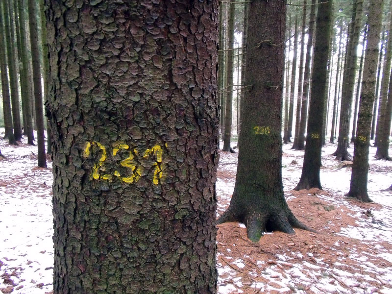Image shows tree marked with yellow number
